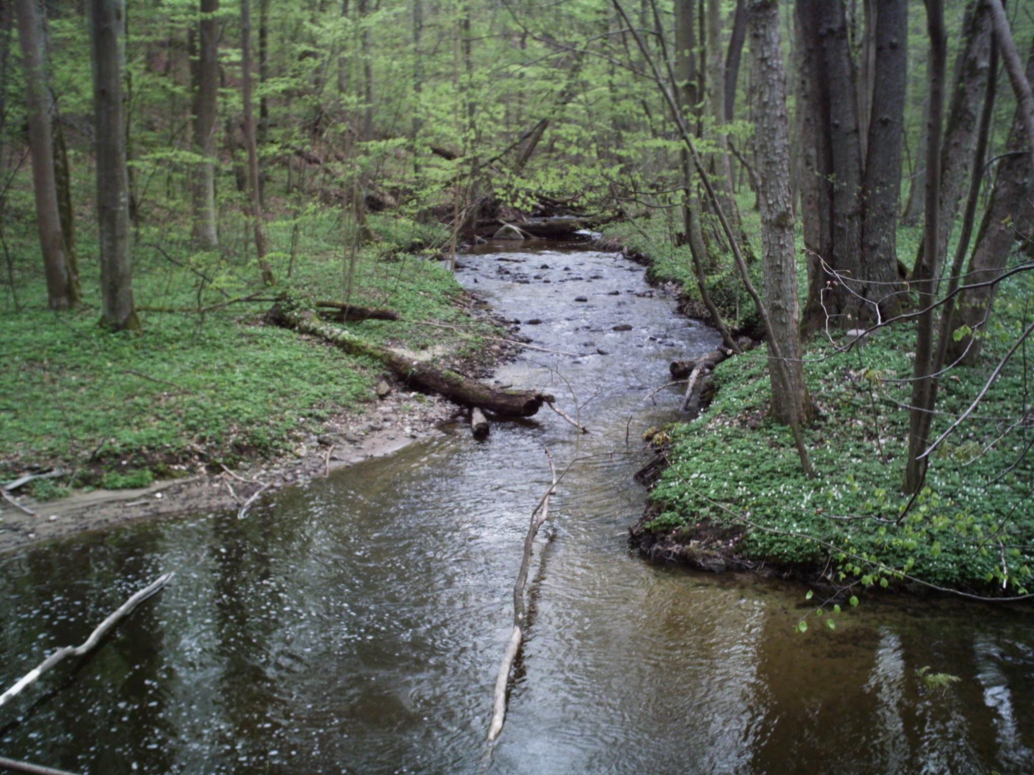 Potok widok w lesie